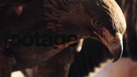 Nature_Trailer_Musik