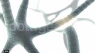 Nervensystem_3D