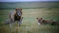 Kenia_Loewen_IMG-20150906-WA0006