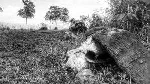 Kenia_Masai_Mara_DSC_1707~2