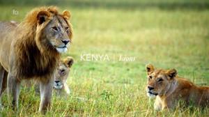 Kenya_Lions