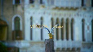 Filmproduktion Frankfurt Dokumentation Venedig